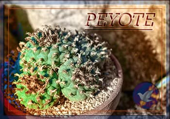 How to Identify Peyote