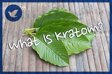 What Is Kratom? Risks of Addiction and Abuse